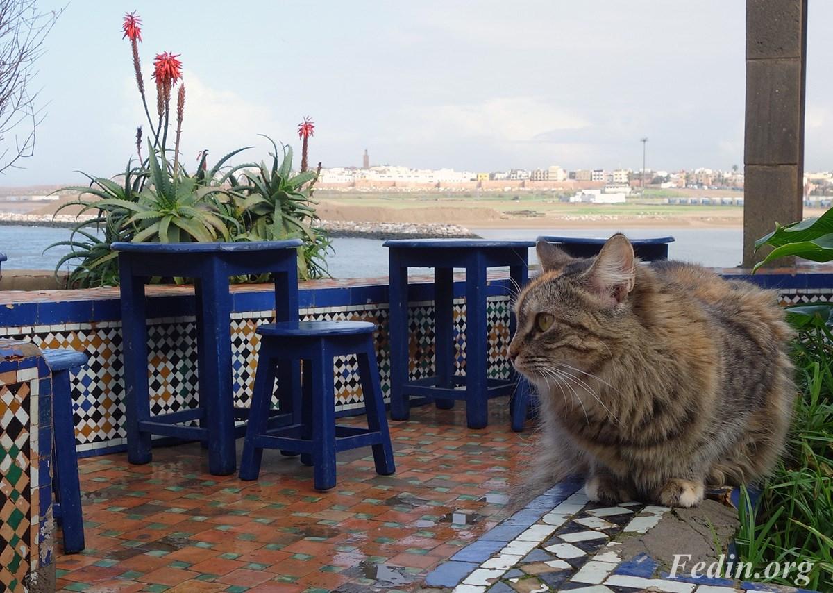 кошки марокко 1