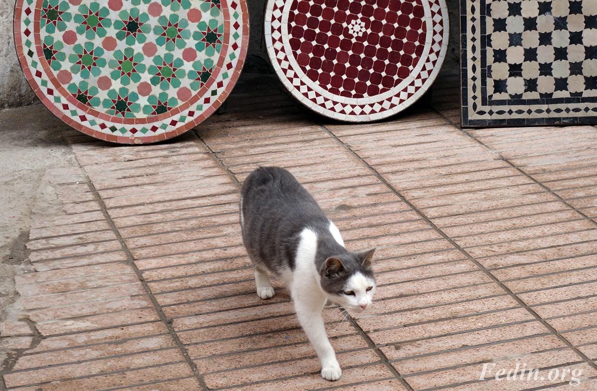 кошки марокко 10
