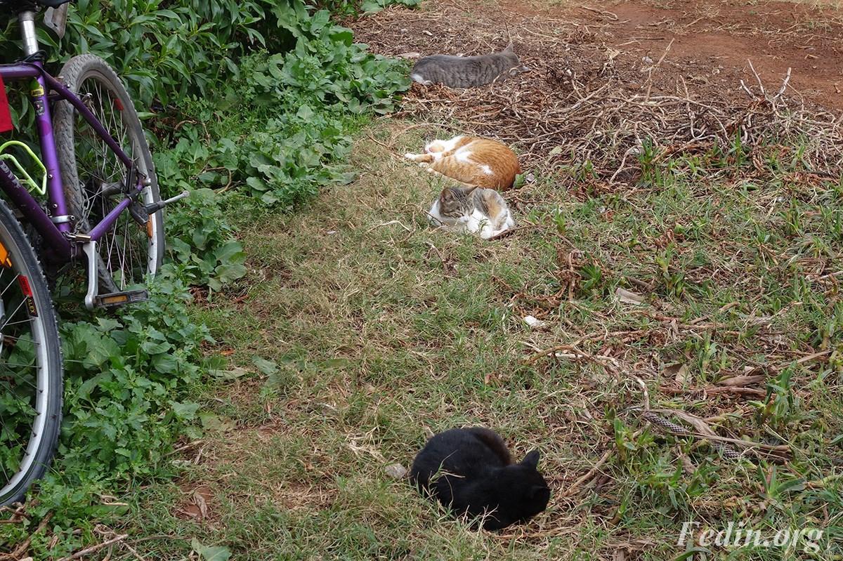 кошки марокко 11