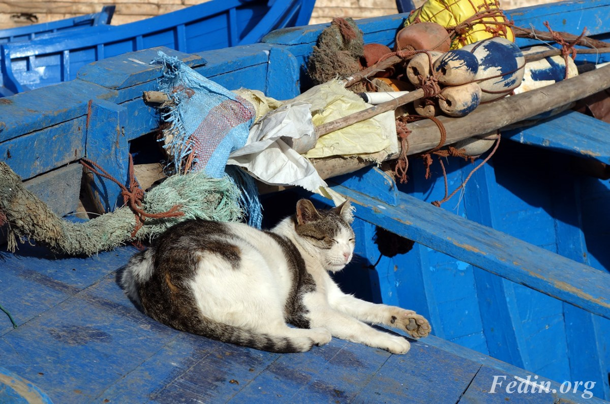кошки марокко 13