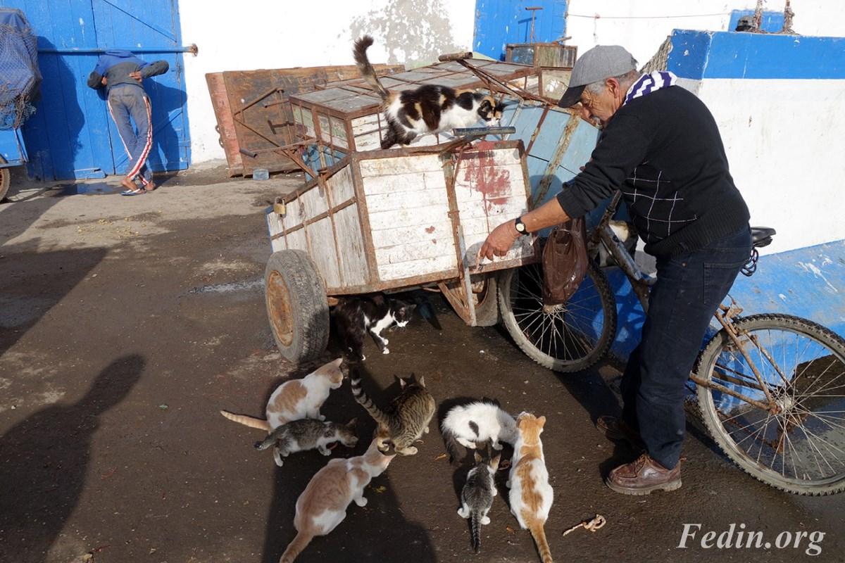 кошки марокко 15