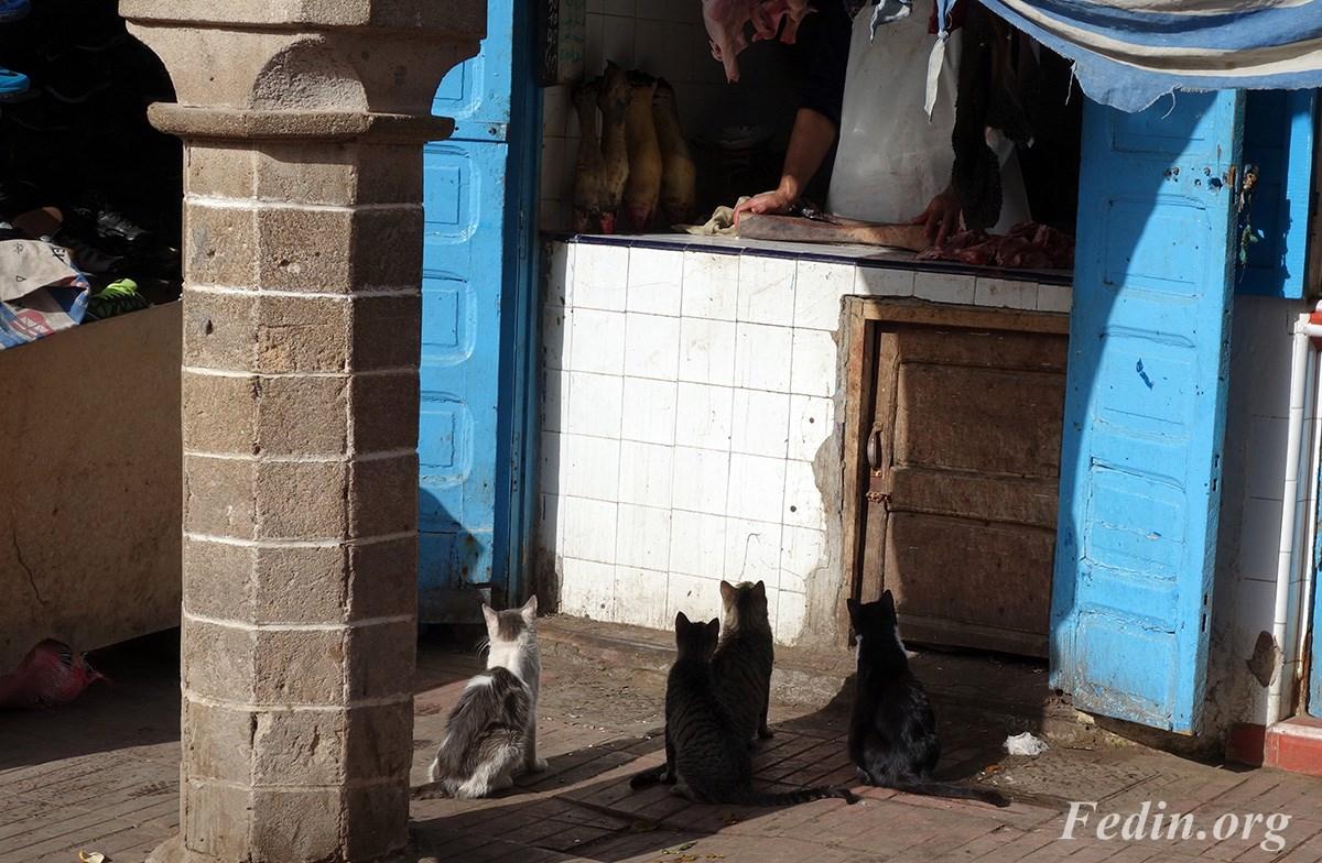 кошки марокко 16