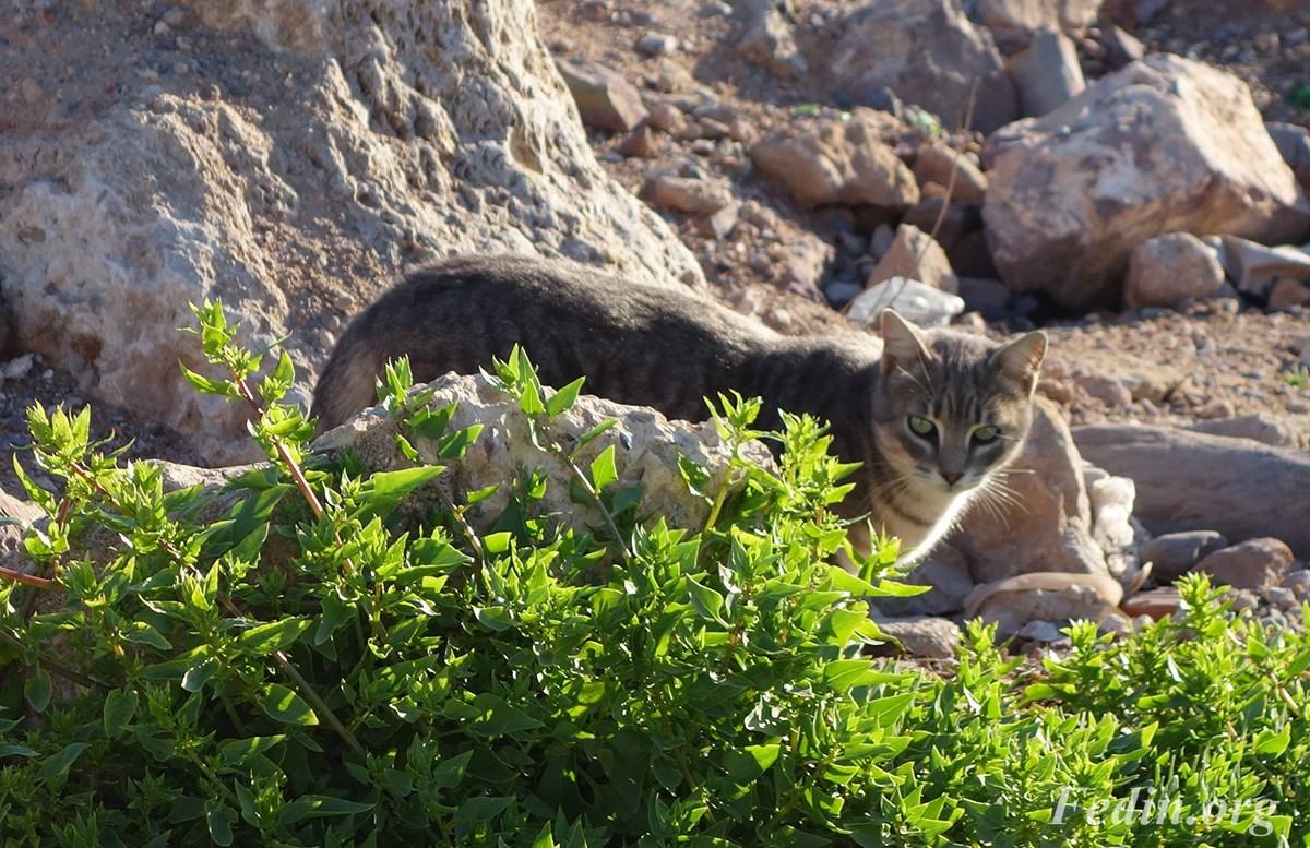 кошки марокко 2