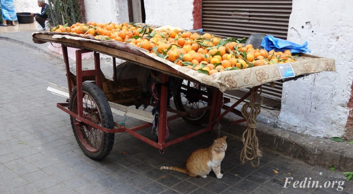 кошки марокко 3