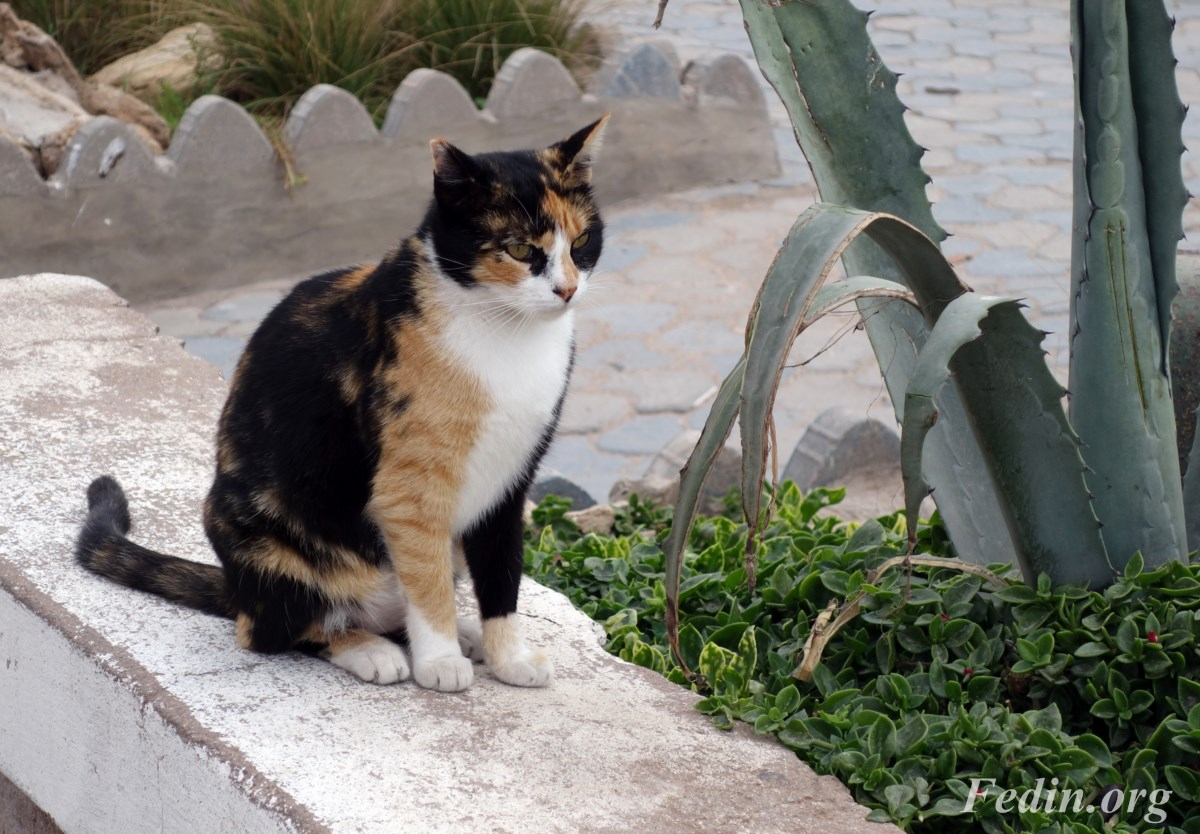 кошки марокко 5