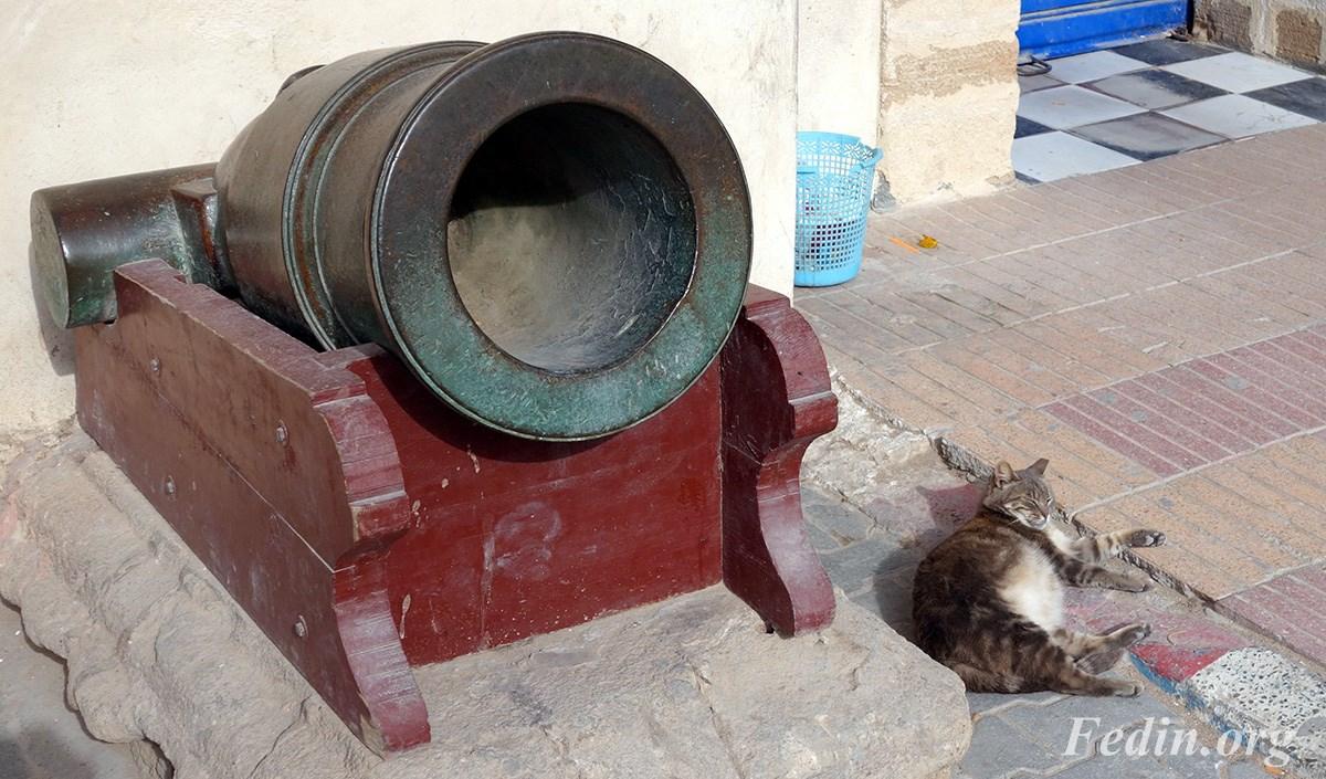 кошки марокко 6