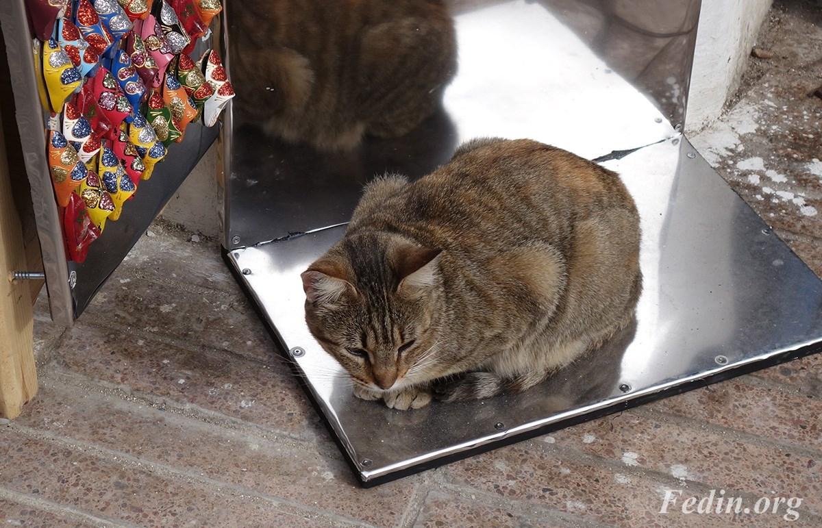 кошки марокко 7