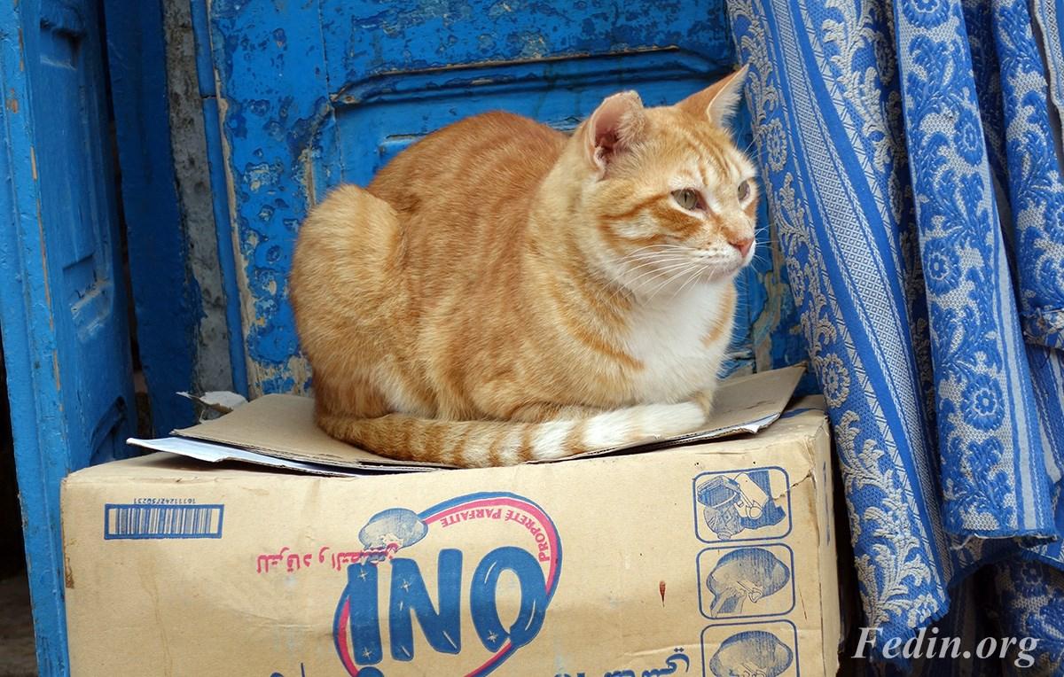 кошки марокко 8