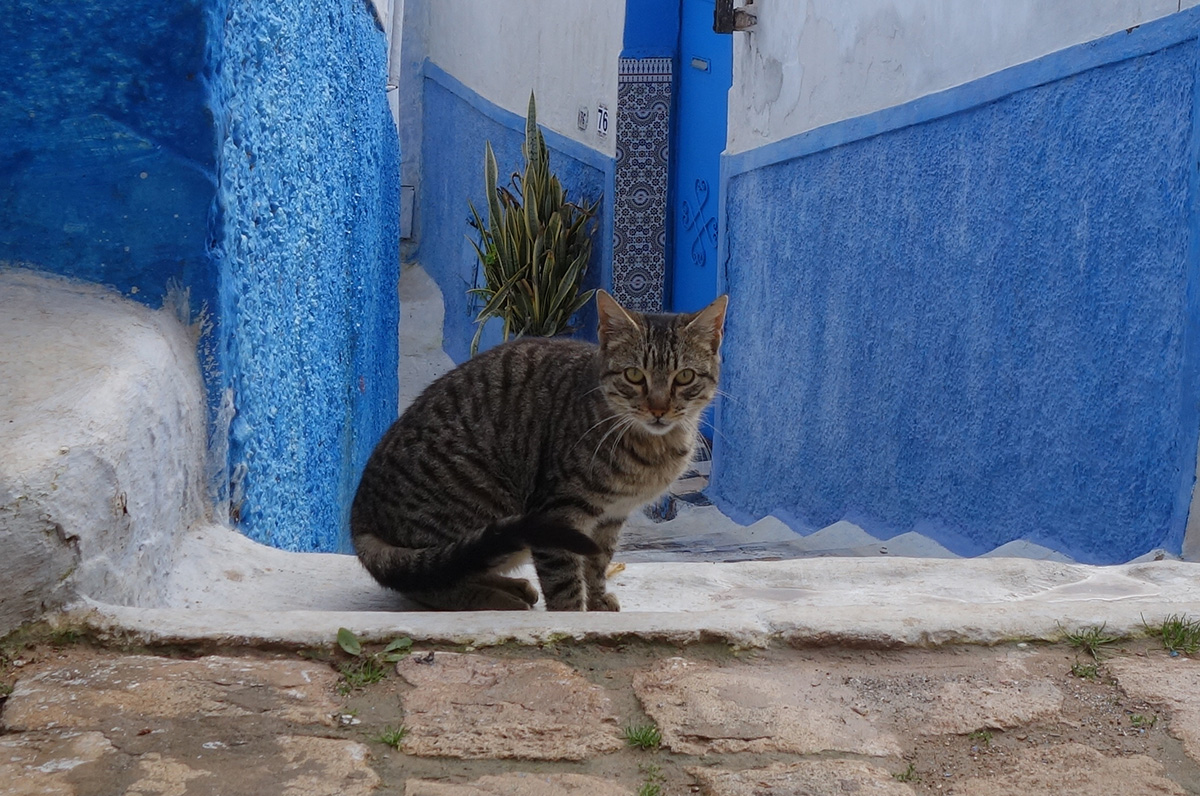 кот в марокко